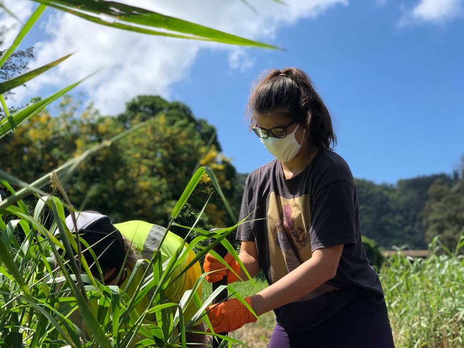 Interning in the midst of COVID-19: CEE undergrad shares her experience